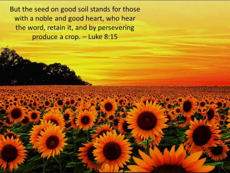 Seed on Good Soil
