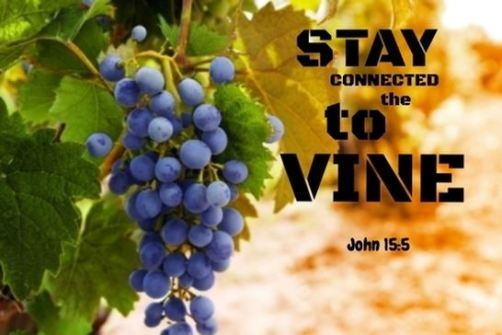 Stay connected to the vine