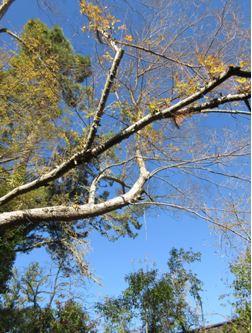 4 Branch
