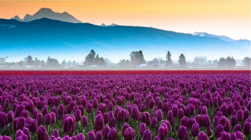 Blooming Garb of Spring