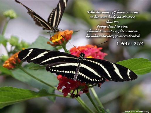 1 Peter 2_24