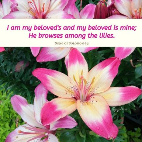 Song of Solomon 6_3
