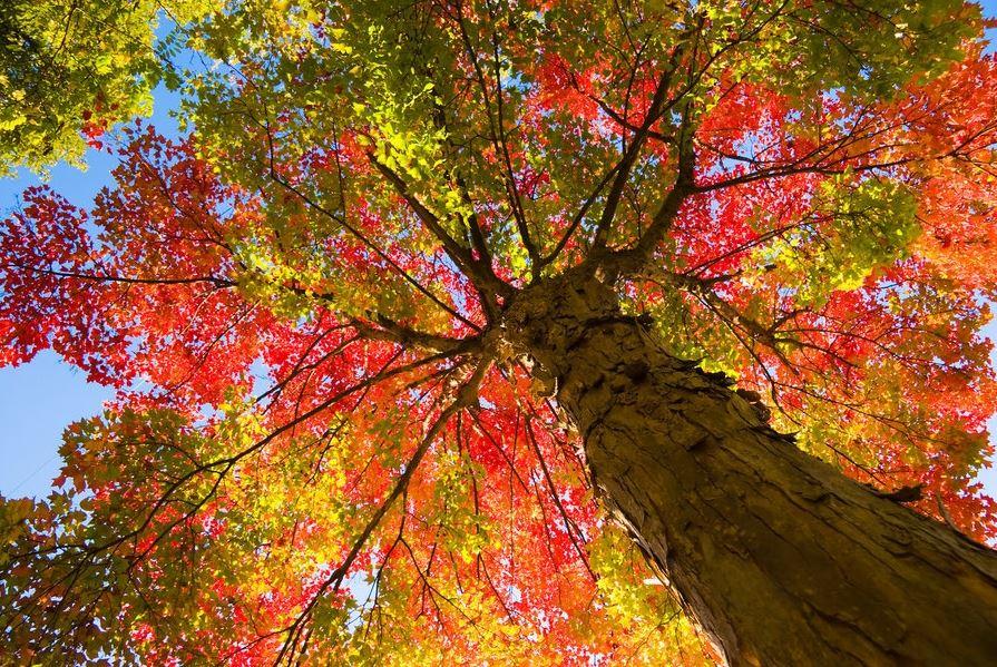 Trees of Autumn (1)